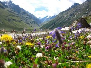 Lahualian summer flowers below the Rohtang pass.