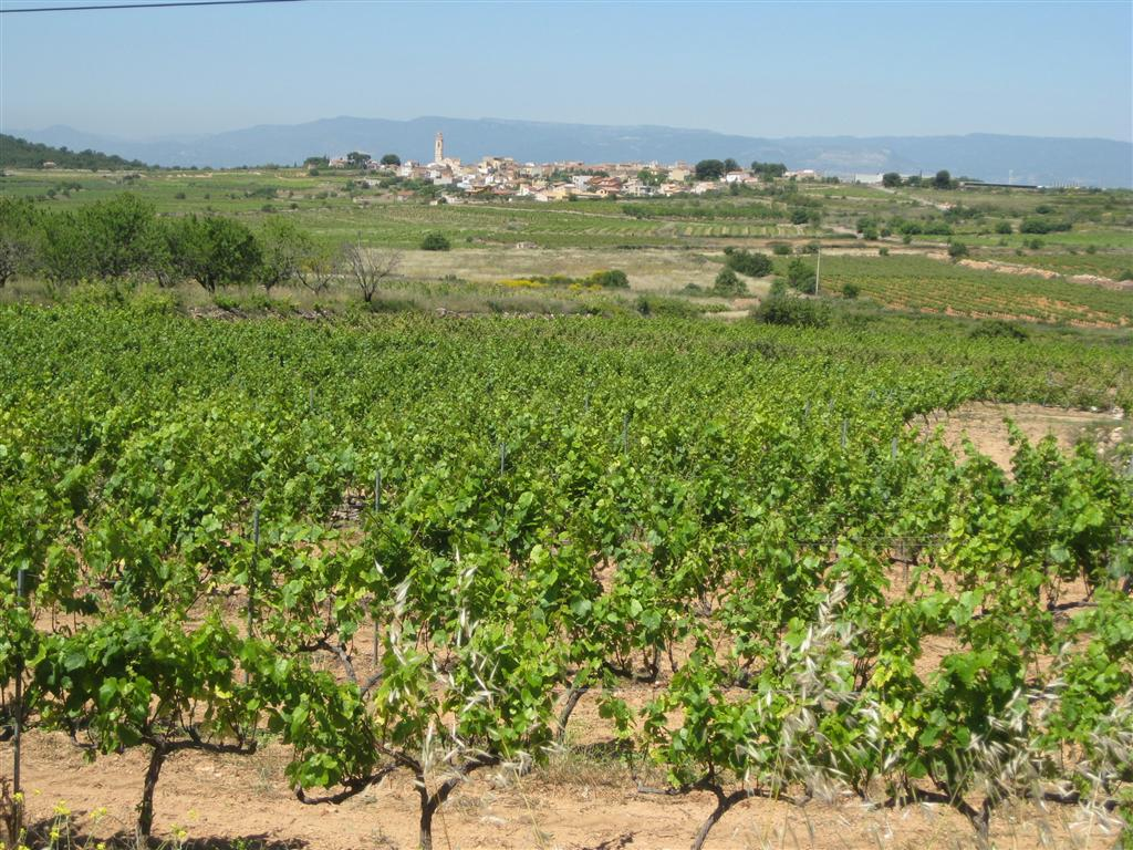 Rural Rodonya - wine, wine wine!