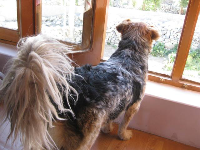 There was no doubt that Rumi remembered us, an excited whine, wagging tail and a recognition of my voice 'Rumi-boy!'. (He does have the most impressive rasta tail)