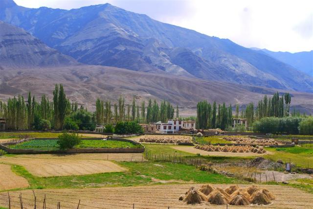 Approaching Phey village, there is always something so very soothing and beautiful about Ladakhi villages