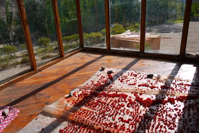 During summer all foods are gathered dried and stored. Here gorgeous tomatoes are sun-dried for the winter. The learners also have a well known apricot jam 'business' the proceeds of which they use to fund their annual school excursion.