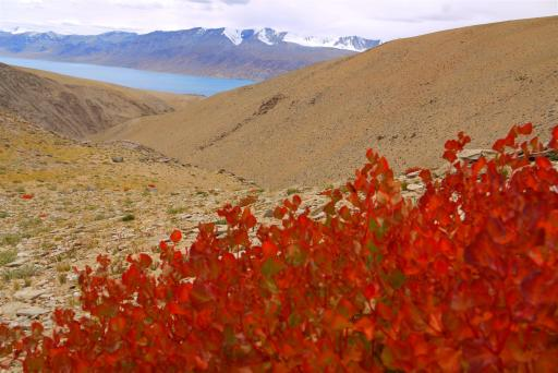 I focussed on the number of different plants species I could count from 5000m onwards.