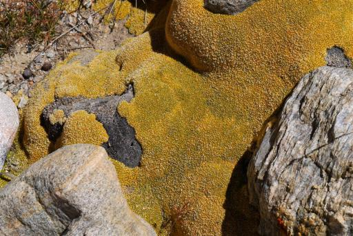 Incredible luminous lichens.