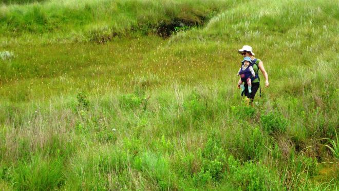 Heading across the grasslands